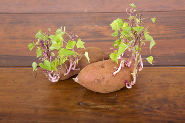 Potatoes sprouting