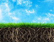 grass and soil - 75950164