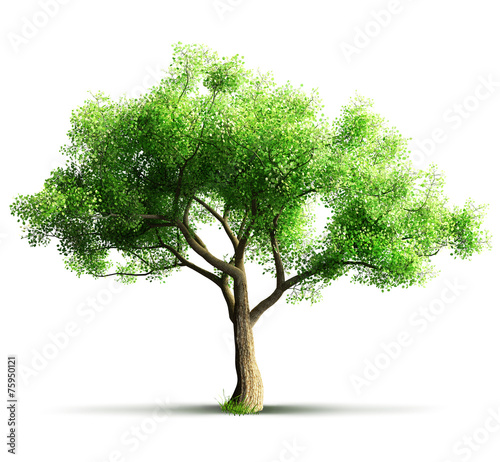 canvas print picture tree isolated