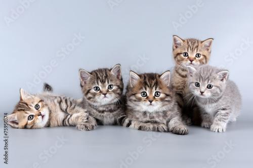 Foto op Aluminium Kat five kittens
