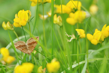 Life in the meadow