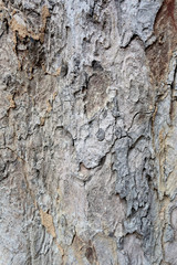 Surface of the bark tree.