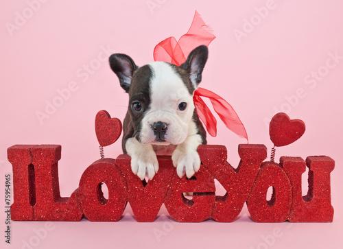 Foto op Plexiglas Franse bulldog I Love You Puppy