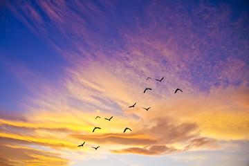 volando por el cielo de colores