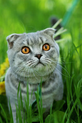 Кот на прогулке в парке