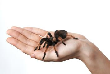 big spider on  hand