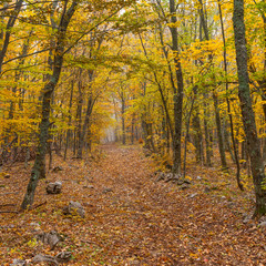 Autumnal landscape in wild forest