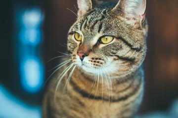Харизматичный кот