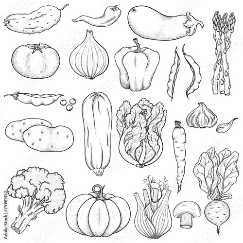 Fototapeta Big set of vegetables