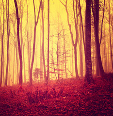 Red colored mystic forest