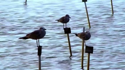 birds sitting on post over ocean
