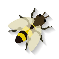 Realistic honey bee isolated on white background. Vector