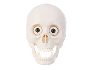 Plactic human skull with open mouth