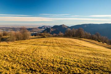 Golden pasture in the Alps