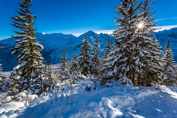 Sunny winter mountain trail