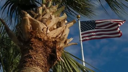 closeup of palm tree, america flag flying in background