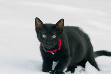 Black cat in white snow