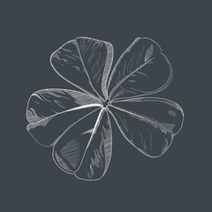 Vector hand-drawing flower