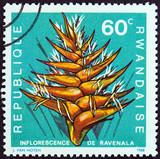 Ravenala madagascariensis (Rwanda 1968) poster