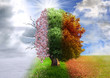 Leinwanddruck Bild - Four season tree, photo manipulation, magical, nature