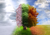 Four season tree, photo manipulation, magical, nature - 75981100