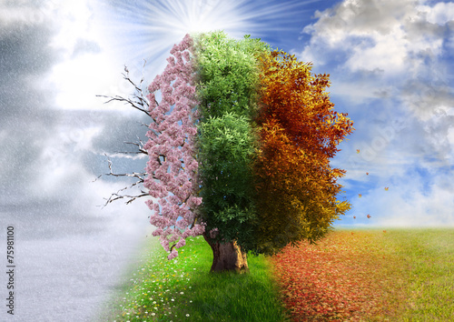 canvas print picture Four season tree, photo manipulation, magical, nature