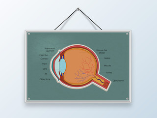 Concept of health and medical with human eye.
