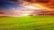 Beautiful sunset on spring field