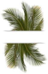 palmes de cocotier sous bandeau blanc