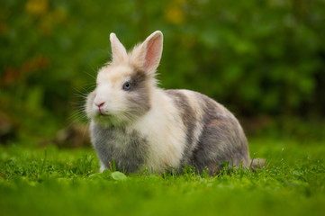 Cute Fluffy Rabbit on Green Grass