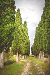 Fantastic road with cypresses to the old homestead.