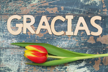 Gracias (thank you in Spanish) written with letters, and tulip