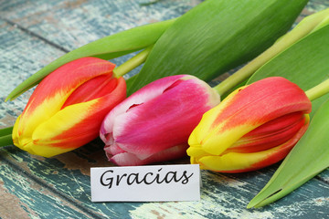 Gracias (thank you in Spanish) with colorful tulips