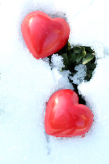 Two red frozen heart on snow and green plants background