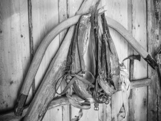 The old horse harness, close-up
