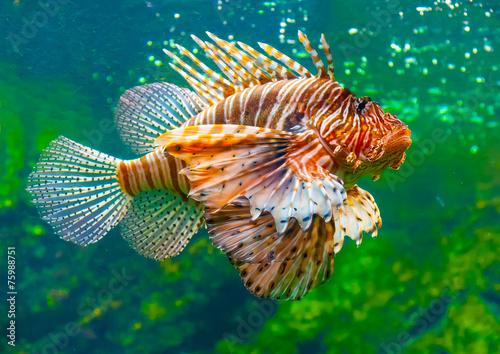 Fotobehang Leeuw a lion fish in the famous aquarium of Barcelona in Spain