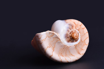 Beautiful seashell isolated on black
