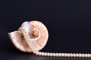 Luxury seashell with white pearls necklace isolated on black