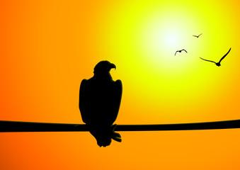 Adler Sonnenuntergang - Eagle Sunset