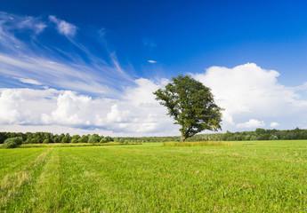 Field Landscape Plain Nature