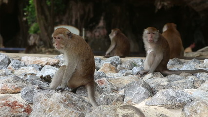 Monkey sit on the rock and on the background of the tourists
