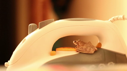 little frog sit on white iron in room
