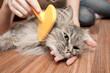 Постер, плакат: cat grooming