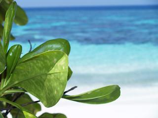 vegetazione maldiviana