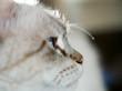 canvas print picture - Katzenkopf seitlich