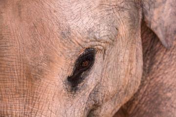 Nahaufnahme eines Elefantenbabys