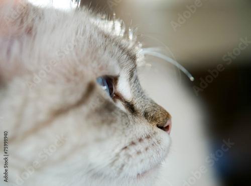 canvas print picture Katzenkopf seitlich