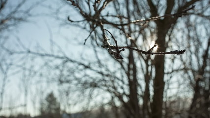 The reflection of sunlight on winter tree branch