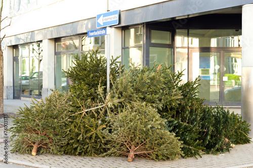 Leinwandbild Motiv Alte Weihnachtsbäume