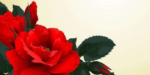 Floral background or banner with red roses